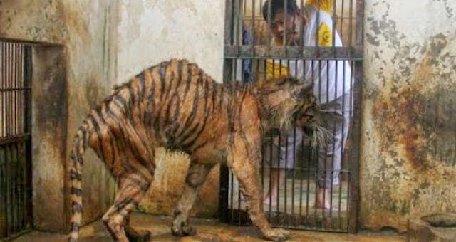 12 GAMBAR Percayakah Anda Inilah Zoo Paling Kejam Di Dunia