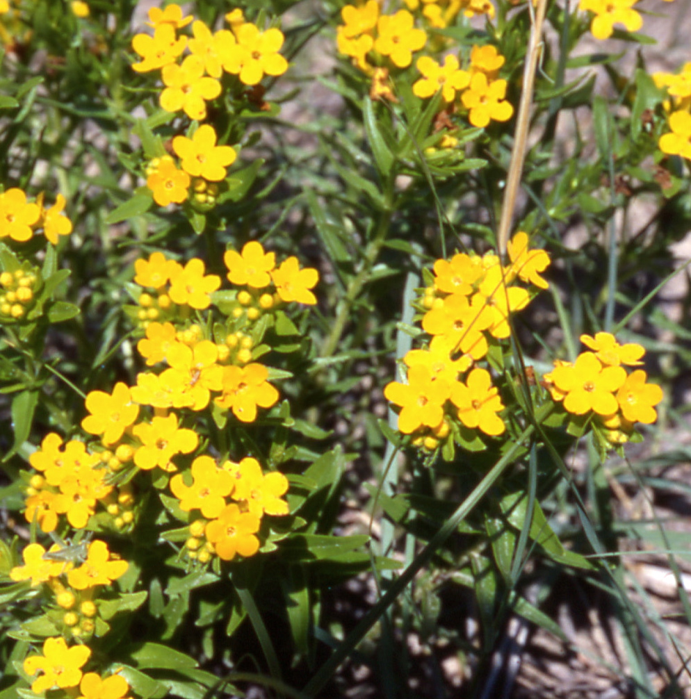 A Wandering Botanist Botany Rules 1 Writing Plant Common Names And