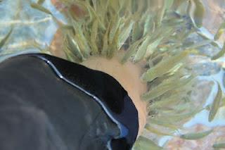 terapi ikan di owabong
