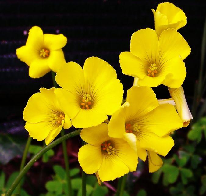Banco de im genes 20 fotos de flores para ver disfrutar - Para ver fotos ...