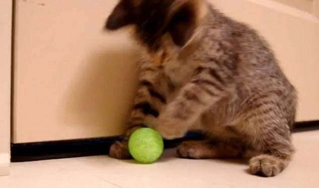 kucing-2.jpg