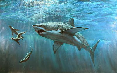 Ocean great white shark wallpapers
