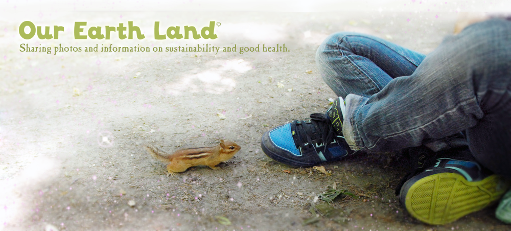 Our Earth Land
