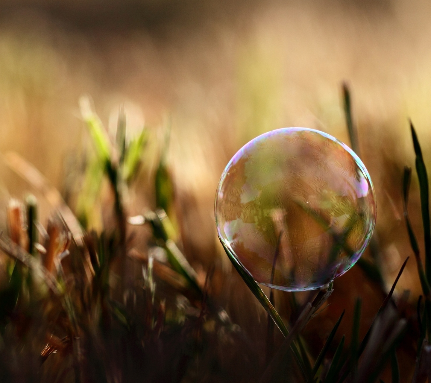 http://1.bp.blogspot.com/-JqbX8wTzX9k/UM-ATl7w5gI/AAAAAAAANMI/LXqqJdV8FRU/s1600/soap-bubble-on-grass-samsung-galaxy-s3-wallpaper.jpg