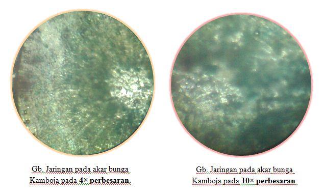 Contoh laporan praktikum mikroskop cahaya: preparat mikroskop