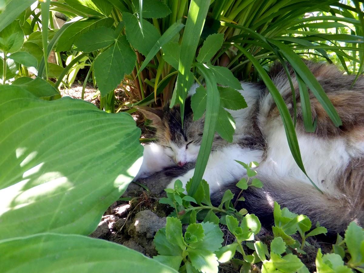 кошка в траве