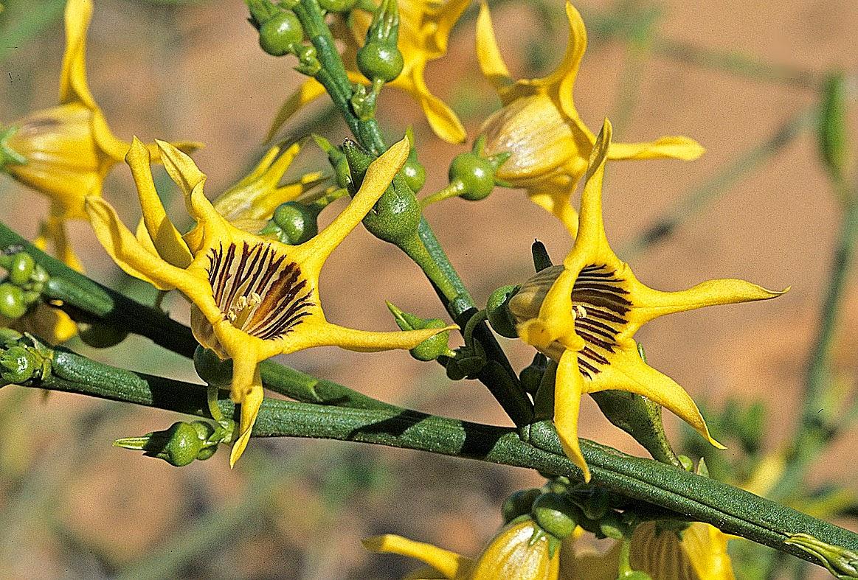 Piante e fiori bizzarri 1 25mq di verde for Orchidea foglie gialle