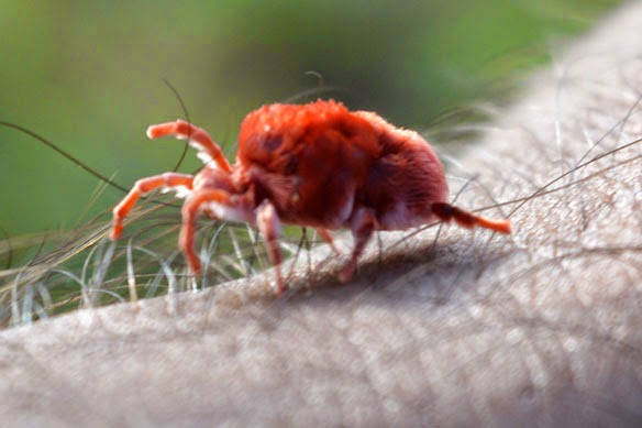 red small Creature