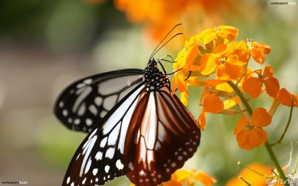 Butterfly on a Flower Best HD Wallpaper