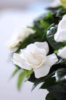 flores holanda