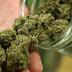 Colombia legaliza marihuana para uso medicinal
