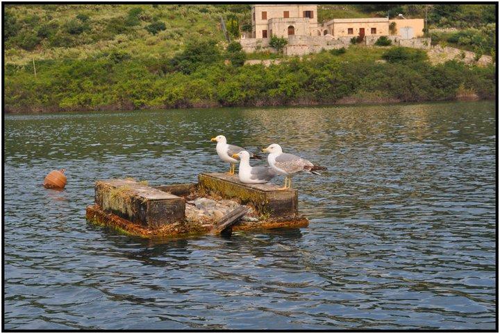 Βαρκάδα στη λίμνη κουρνά - αποκόρωνας