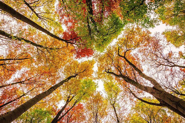 My Favourite Things About Autumn: Trees | Katie Kirk Loves