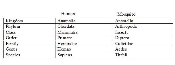 evolution bio blog js 5 1 taxonomy and binomial nomenclature. Black Bedroom Furniture Sets. Home Design Ideas