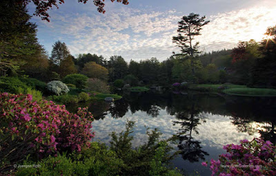 http://juergen-roth.artistwebsites.com/featured/asticou-azalea-garden-juergen-roth.html