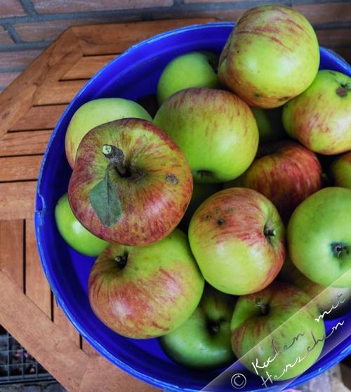 Äpfel im Eimer - James Grieve