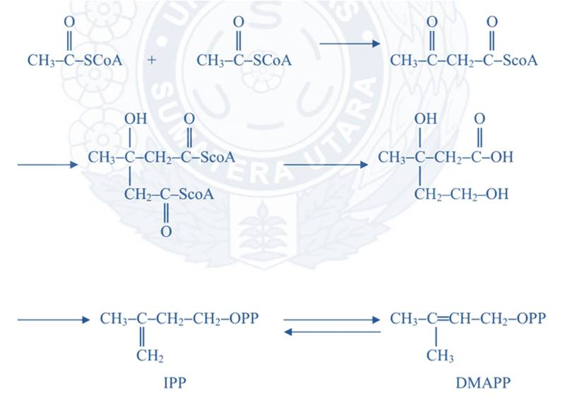 biosintesis kolesterol dan steroid