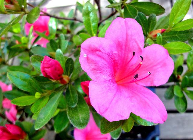 Decoraci n f cil flores de invierno for Plantas de invierno para exterior