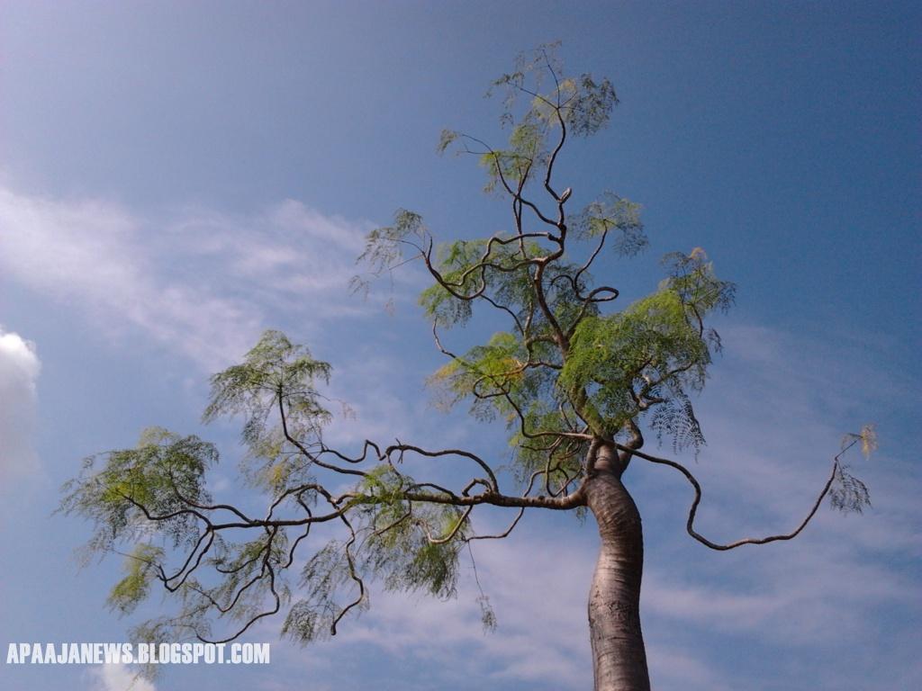liuk lentok pokok
