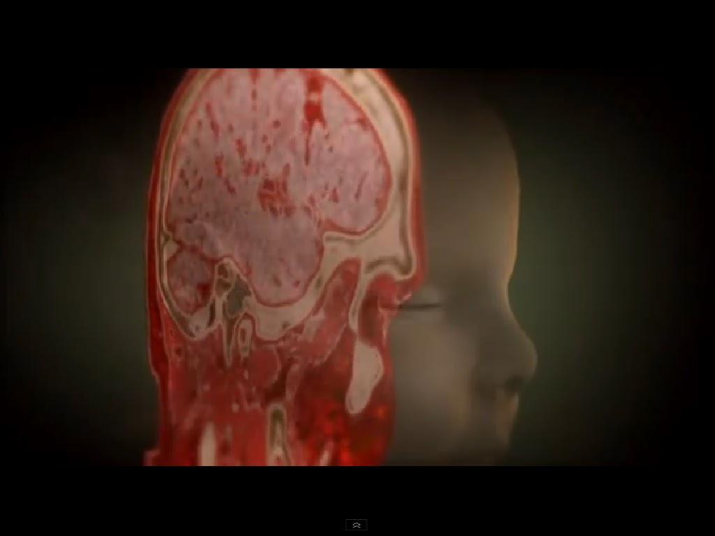 El m stico viaje al interior del cuerpo humano for Cuerpo humano interior