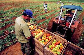 DIA DE LA AGRICULTURA - DIA DEL PRODUCTOR AGROPECUARIO. 08 de Septiembre.