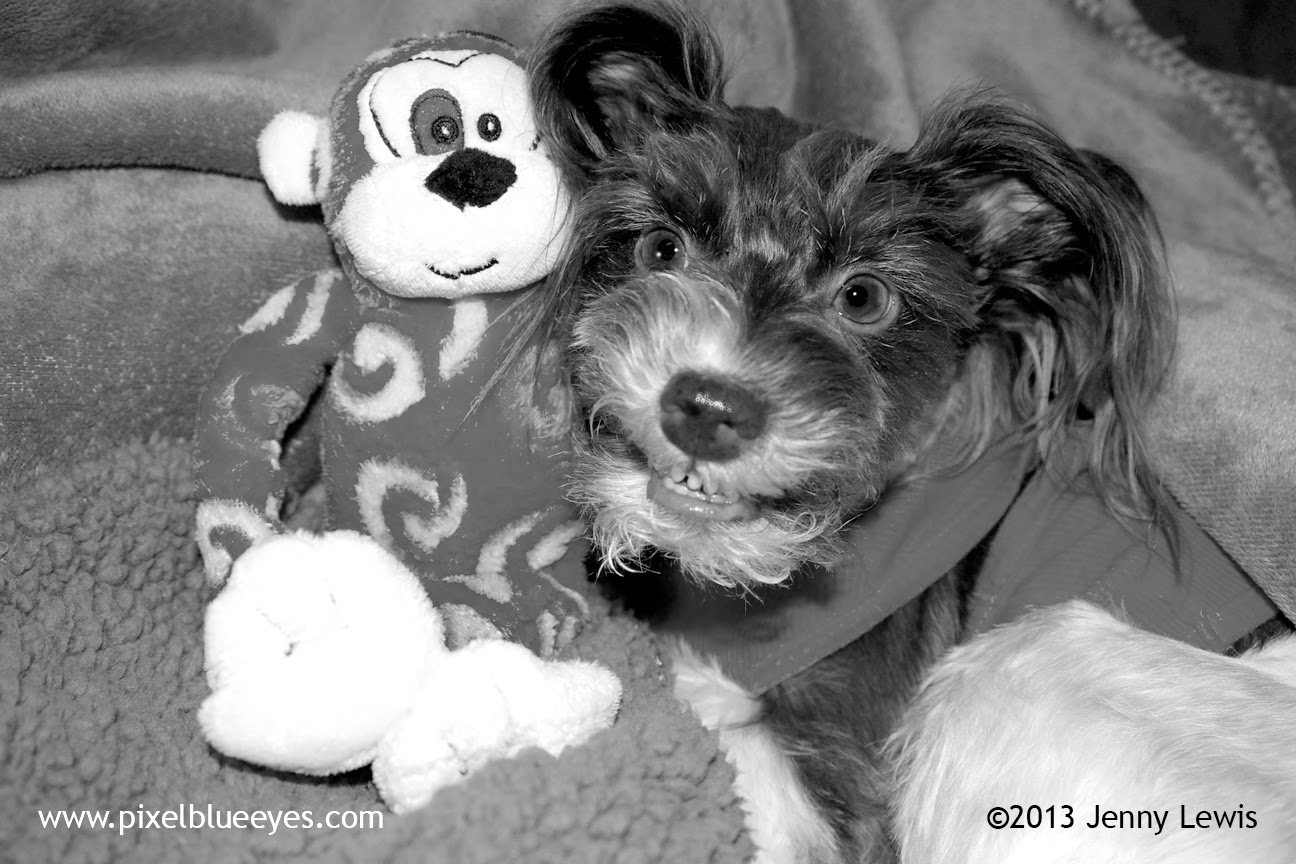 Black & white photo of Pixel smiling big with Randolf the Red Eyed Monkey Toy