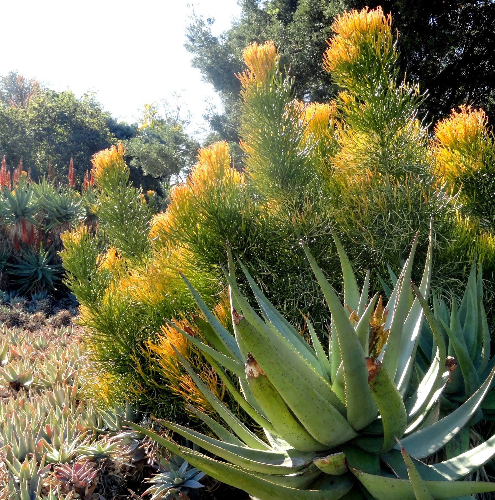 My Visit To The Los Angeles County Arboretum And Botanic Garden, Part Two