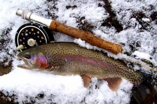 Southern renaissance man 10 reasons why fly fishing is for Fly fishing breckenridge