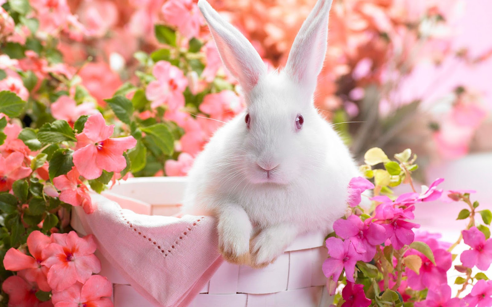 http://1.bp.blogspot.com/-JtLMcRYLk2I/T3bKUXHDJuI/AAAAAAAADlc/-M02-lreJYo/s1600/hd-easter-bunny-wallpaper.jpg