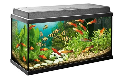 aquarium g nstig kaufen. Black Bedroom Furniture Sets. Home Design Ideas