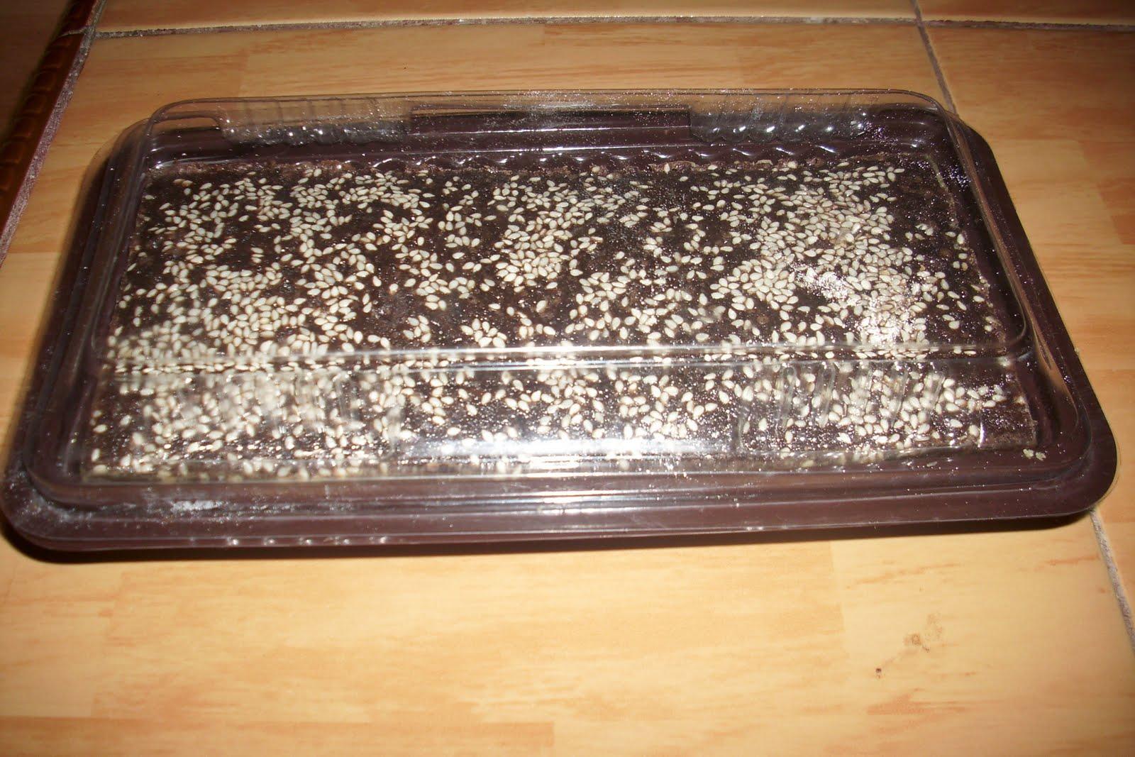 BROWSING (Brownies Singkong)