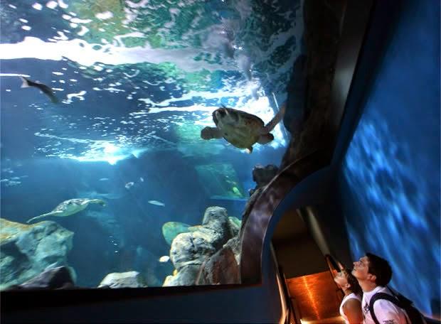 Turismo en villaviciosa concejo de asturias agosto en gij n Aquarium familia numerosa