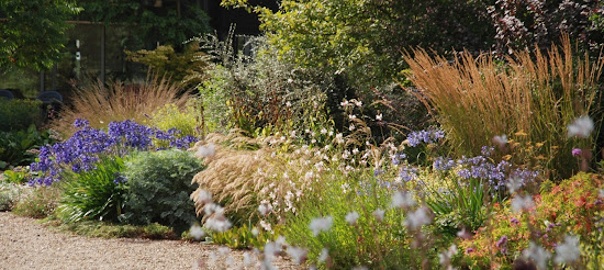 Gräser Garten storchschnabel und andere stauden gräser und ihre verwendung 3 3