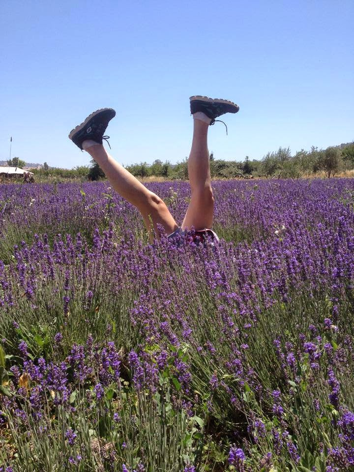 Kicking up our heels  lavender fields  Soul Food Farm Antique Market