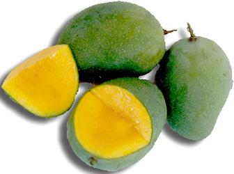buah mangga mungkin termasuk buah yang cukup terjangkau dan cukup ...