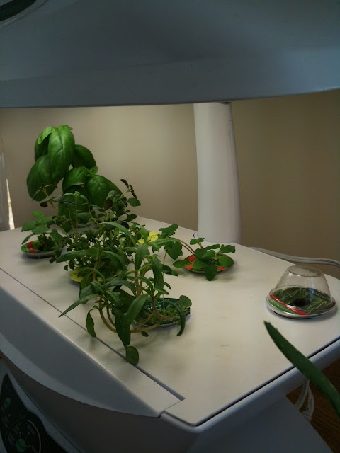 aerogarden, customer service, great customer service, great customer service aerogarden, aerogrow customer service