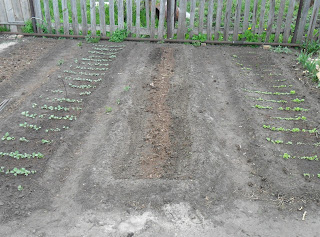 23 мая, справа - салат