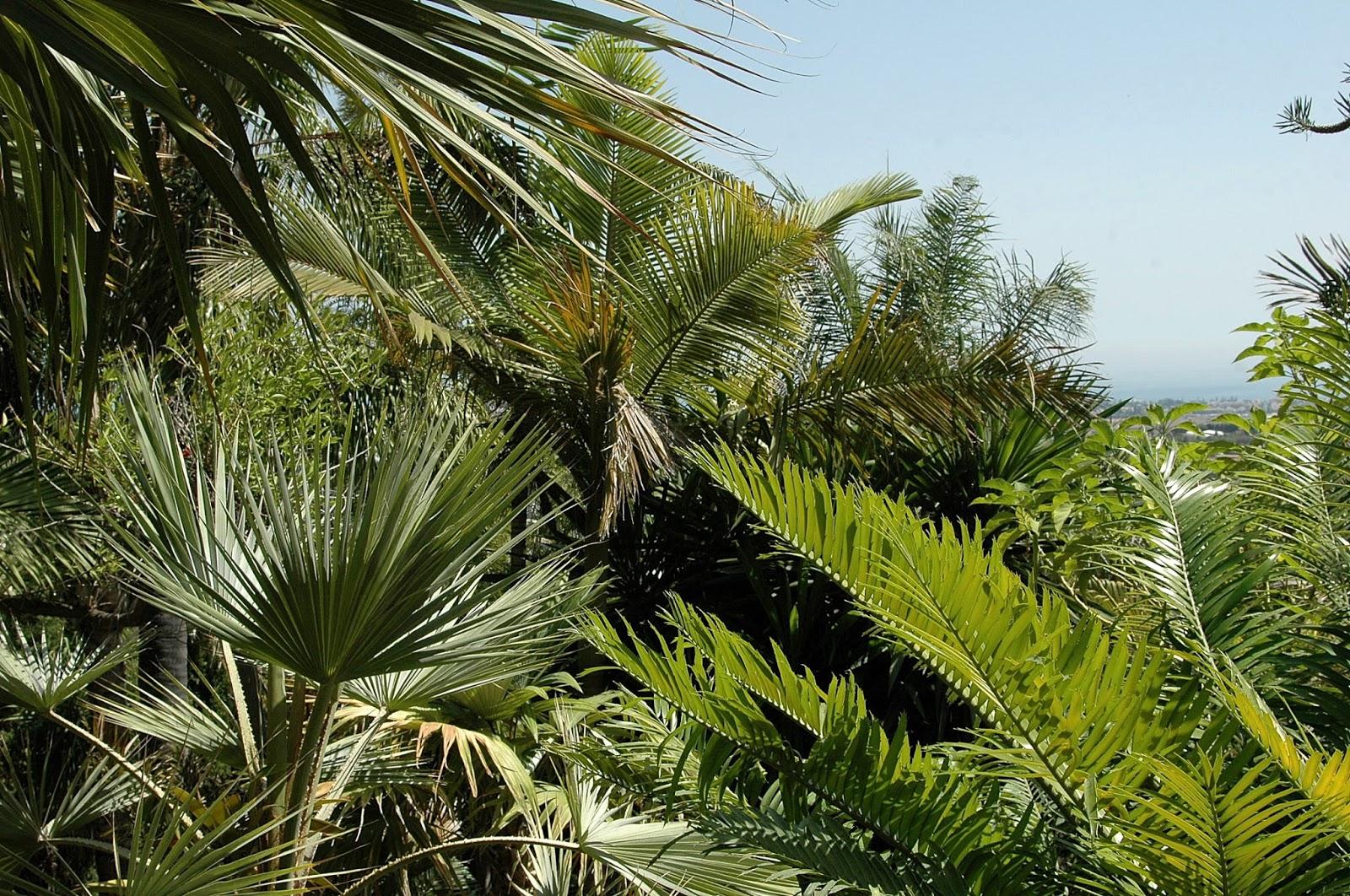 Floraciones en m laga y m s jard n tropical de palmeras for Palmeras pequenas para jardin