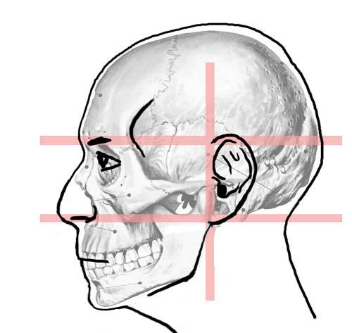 menschlicher muskelaufbau bilder