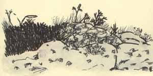 núria mochón