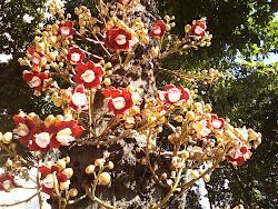 Flor linda