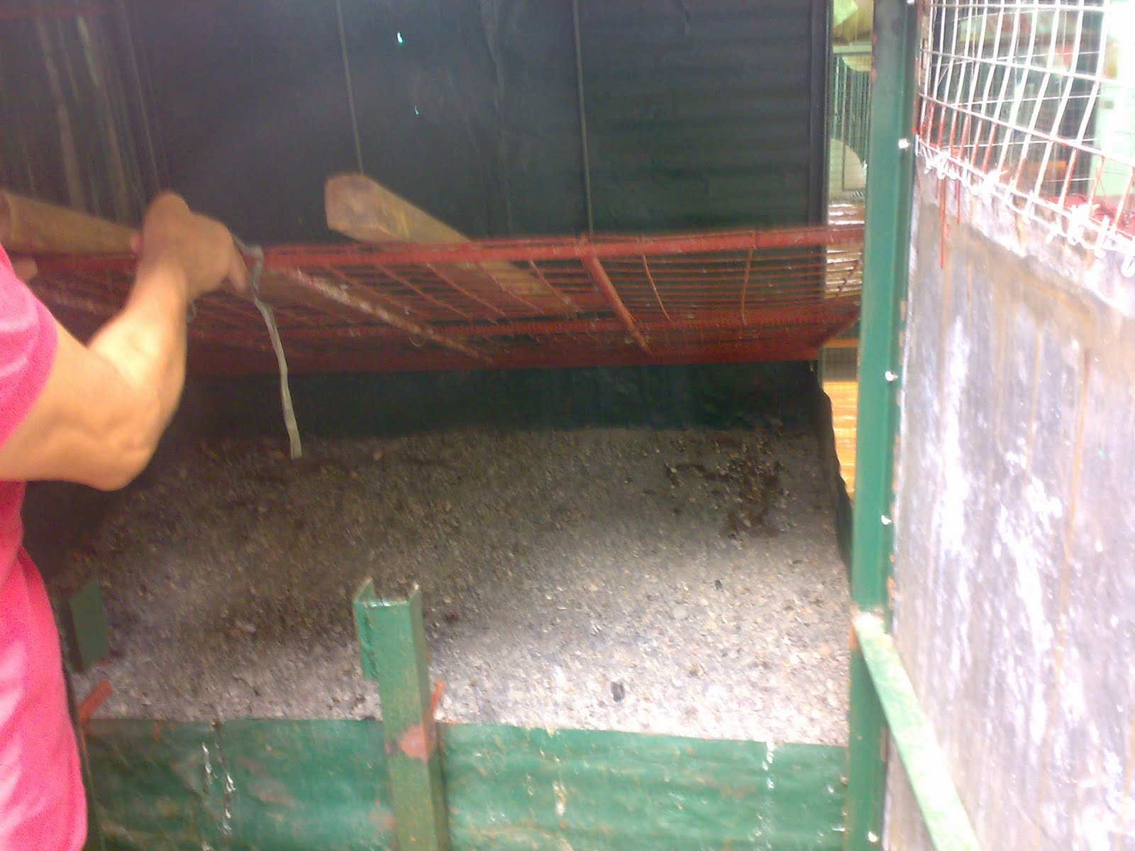 on raising chickens in the backyard cleaning the chicken coop