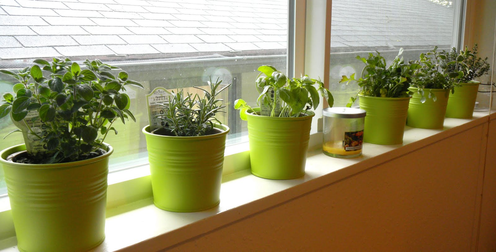 Cornwall capers windowsill herbs Kitchen windowsill herb pots