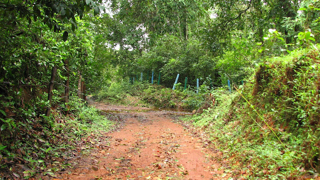 Rainforest Research Station , Agumbe
