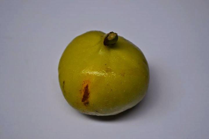 Figs : White Genoa