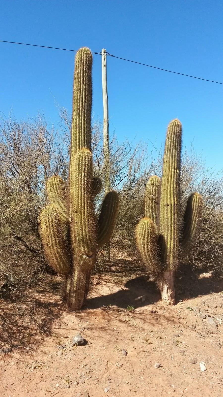 cactus-ande