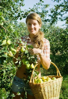How to Starting a Pear Farming Business