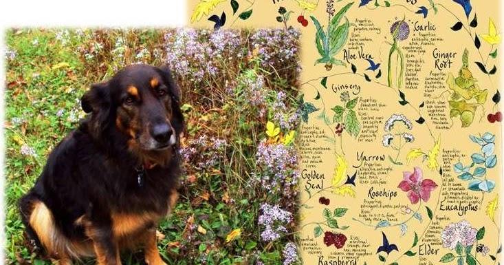 Ottawa Valley Dog Whisperer Herbs Spices Good For Dogs