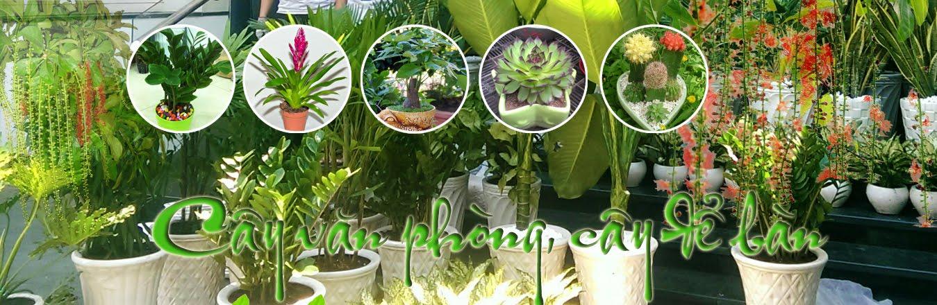 trong rau san thuong, trồng rau trên sân thượng có mái che, mô hình trồng rau sạch tren san thuong,