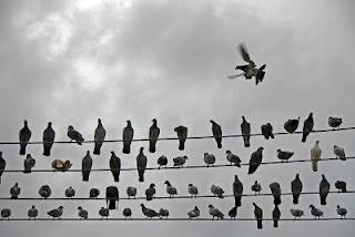 لماذا تقف الطيور على أسلاك الكهرباء من دون أذى ؟